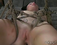 Palatable dark brown sweetie bounded with ropes is punished with a lash