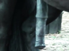 Horse fuck husband! Hubby crying when the big black pony penetrates his asshole
