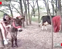Donkey fuck chick! Animal crazed brunette whore pleasuring a donkey and herself