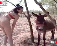 Donkey Fucks! Cute redhead coed in red panties masturbating in front of a donkey