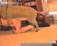 Donkey Fucks Man! Cute redhead coed in red panties masturbating in front of a donkey
