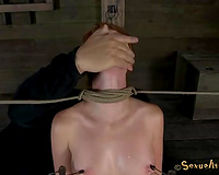 Slender chestnut haired wench receives teats pinned and cookie teased