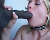 Girl in sparkly collar sucks large dark shlong