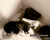 Spycam watches a white women engulf a knob lustily