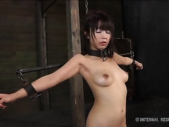 Slim Asian sweetie with a gag in her face hole is bounded on the floor