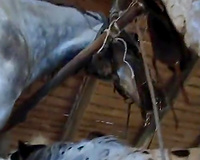 Long horse penis for my wife she love animal sex in the farm