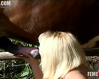 Amateur housewife enjoys crazy oral sex with the horse