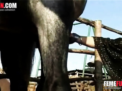 Blonde mature wife goes wild with horse's dick in her mouth